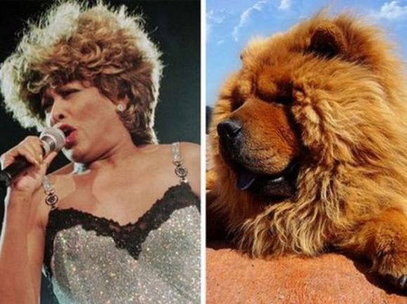 Tina Tarner left Chow chow dog right