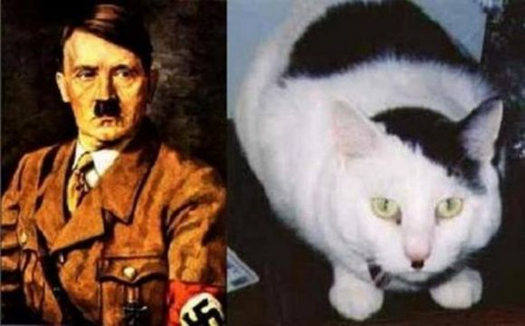 Hitler and white black cat with stache