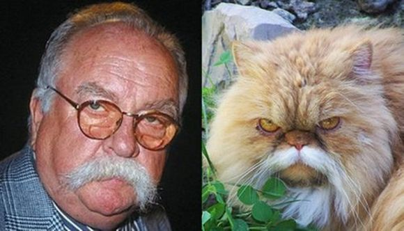 Wilford Brimley as yellowish Cat with white stache