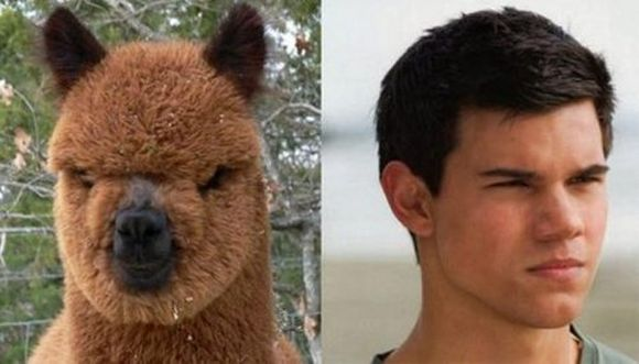 Lama and  Taylor Lautner