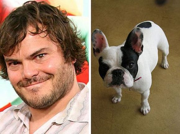 Comedian Jack Black and French bouldog