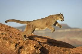 Puma in trouble