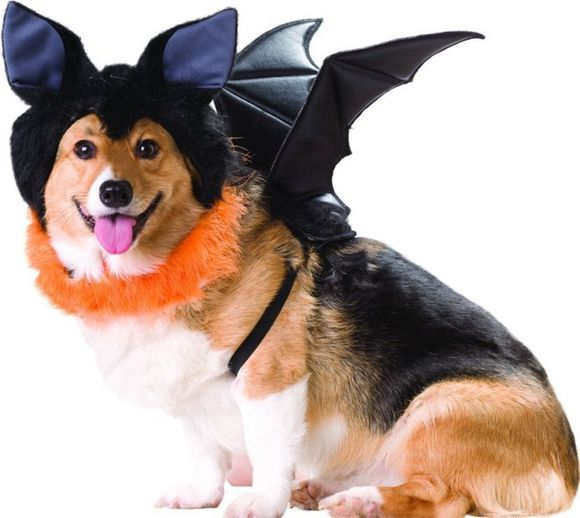 bat halloween costume for dog