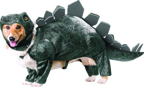 dog dressed in dinosaur costume