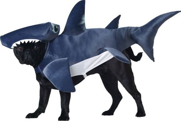 shark halloween costume for dog