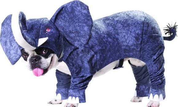 elephant dog costume for a puppy