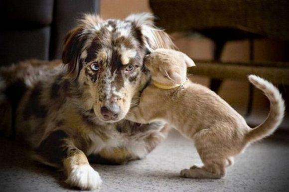 small kitten wisper to dog ear