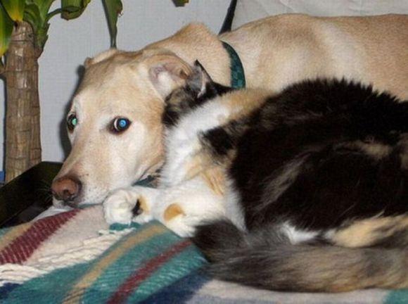 cat talk to dog ah animals