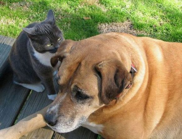 cat tells dog to stay calm