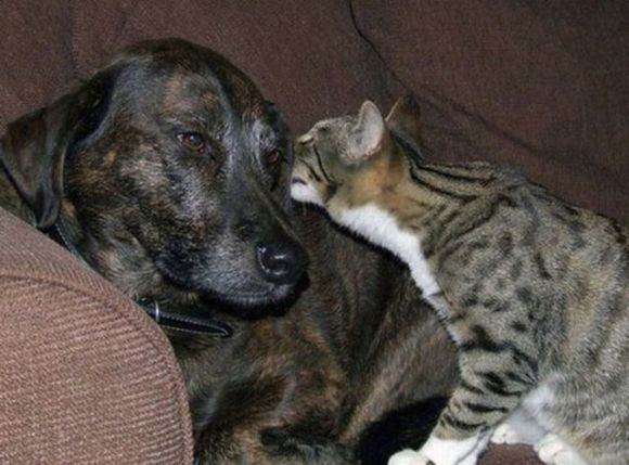 cat wisper to dog