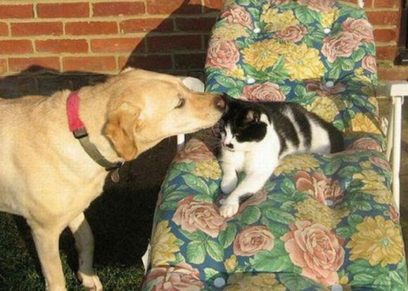 dog wisper to cat