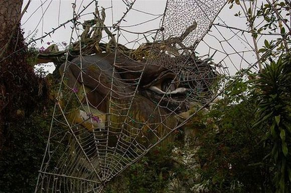 spider looking web made of tree branches