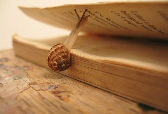 snail push the page on book