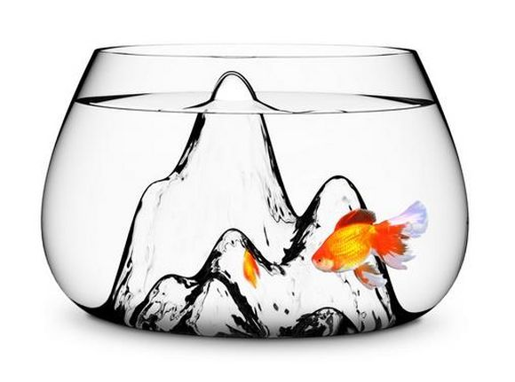 fishbowl with golden fish in it