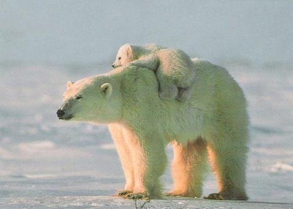 bear21