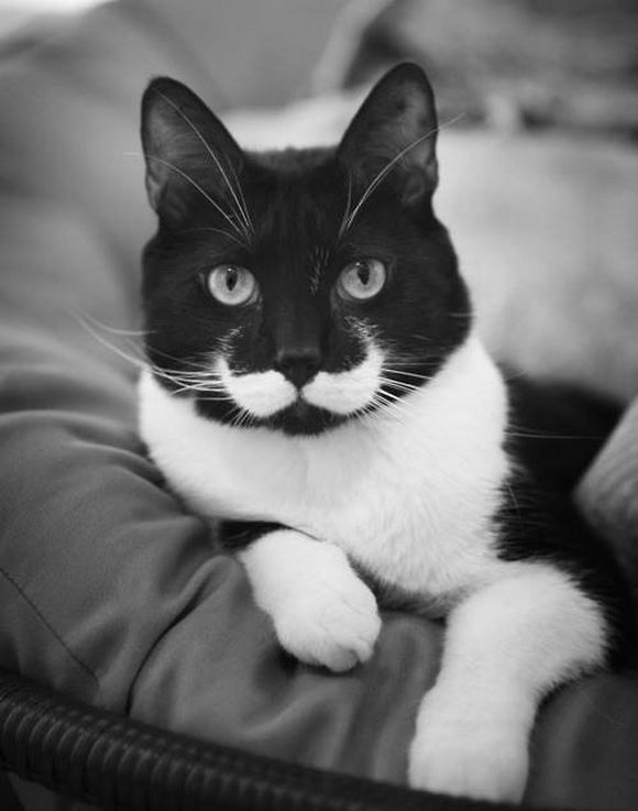 mustached10