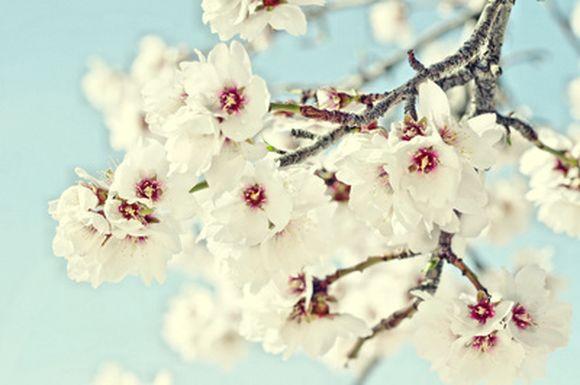 spring14