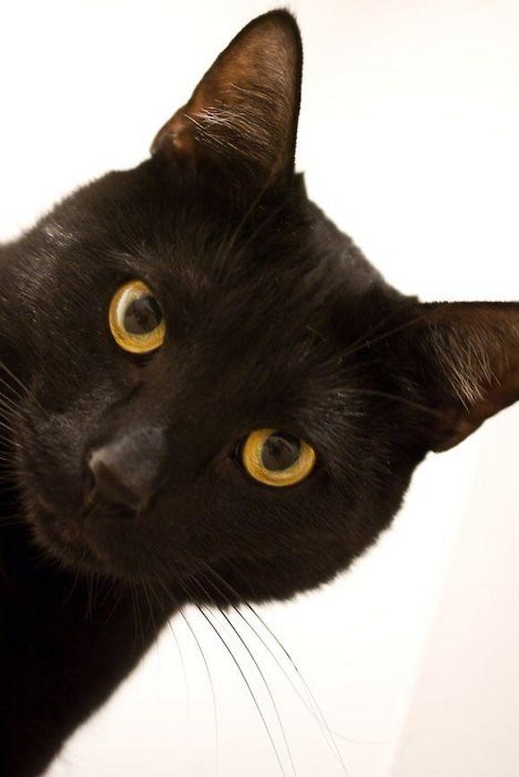 blackcat15