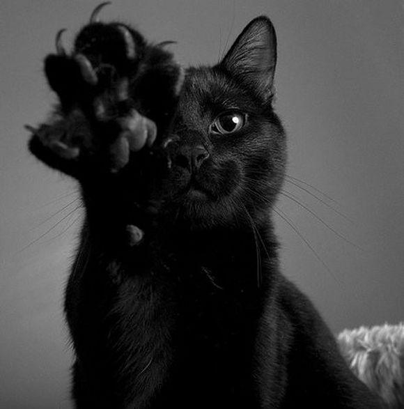 blackcat16