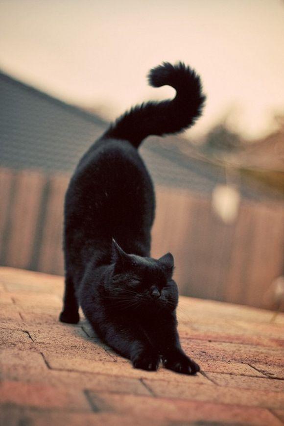 blackcat19