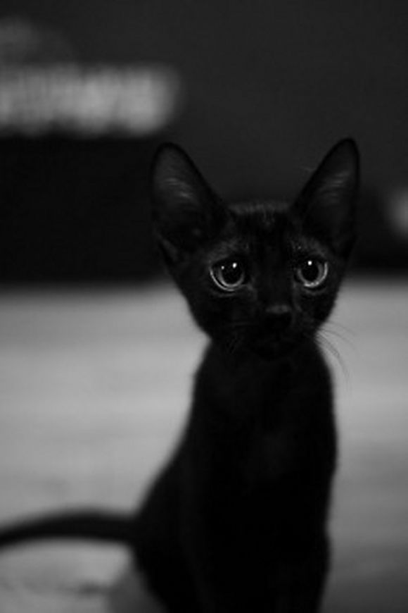 blackcat20