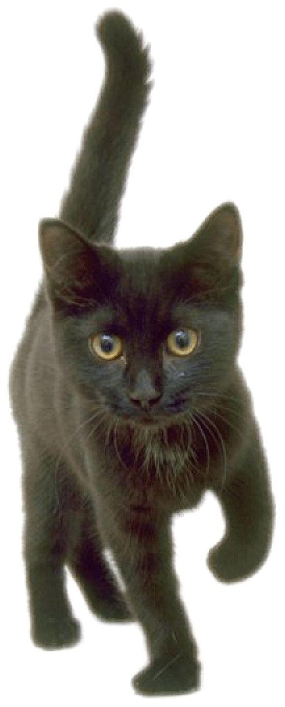 blackcat22