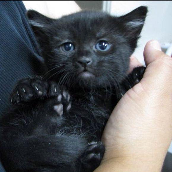 blackcat24