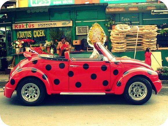 ladybug24