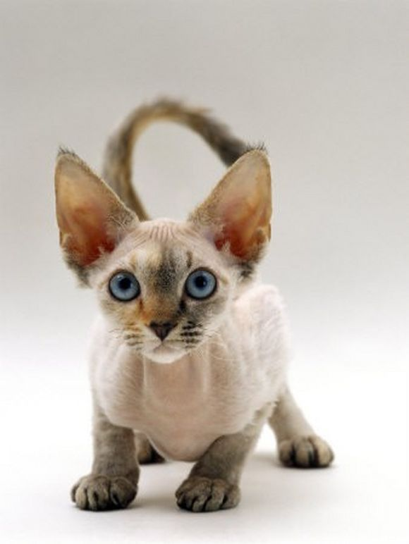 catt1