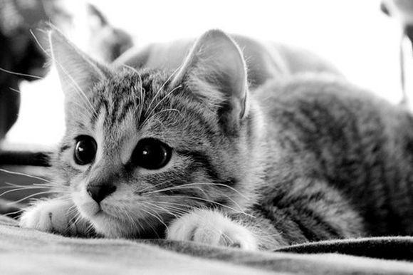 catt12