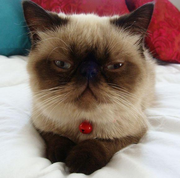 catt15