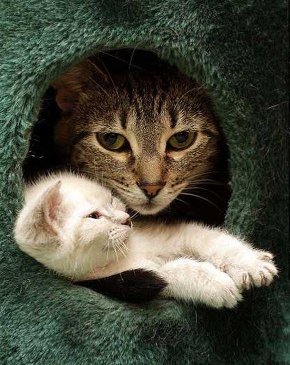 catt3