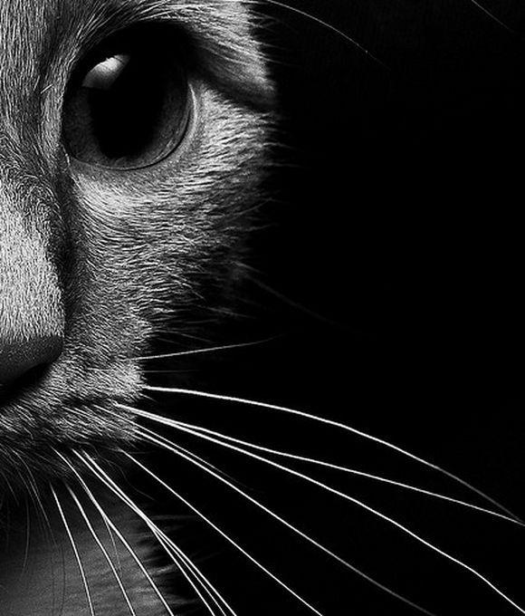 catt6