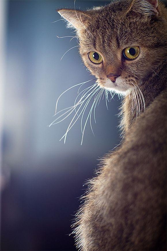 catt7