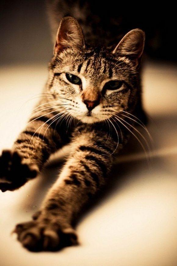 catt9