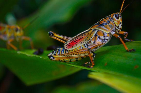 Büyükçekmece böcek ilaçlama
