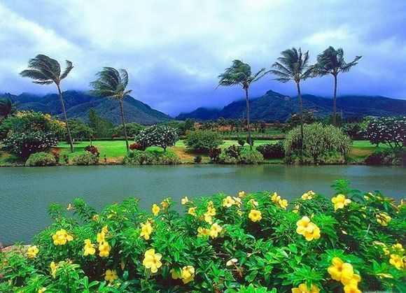 green hawaii landscape