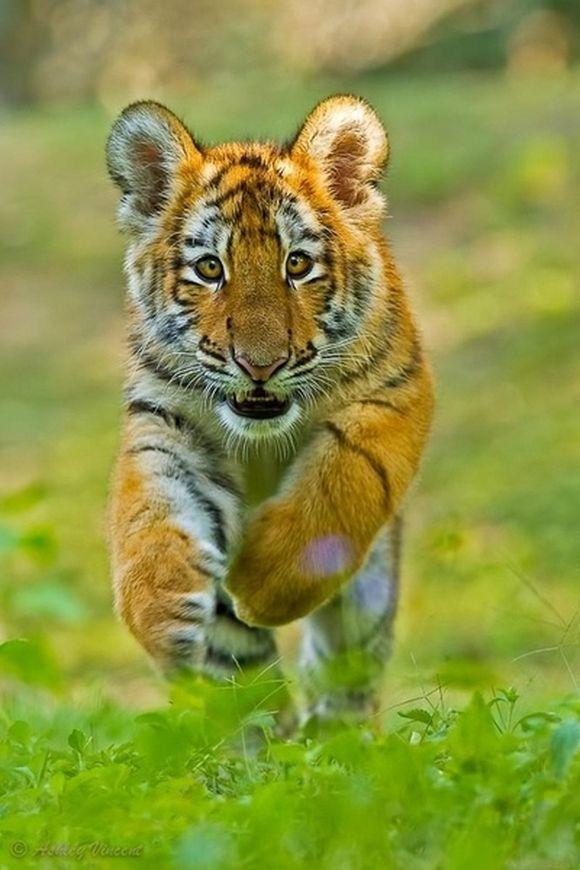 animal18