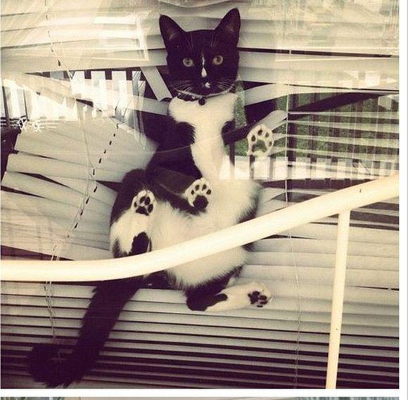 catsblinds
