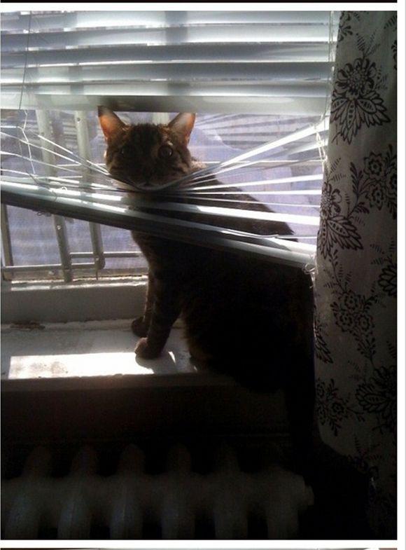 catsblinds1