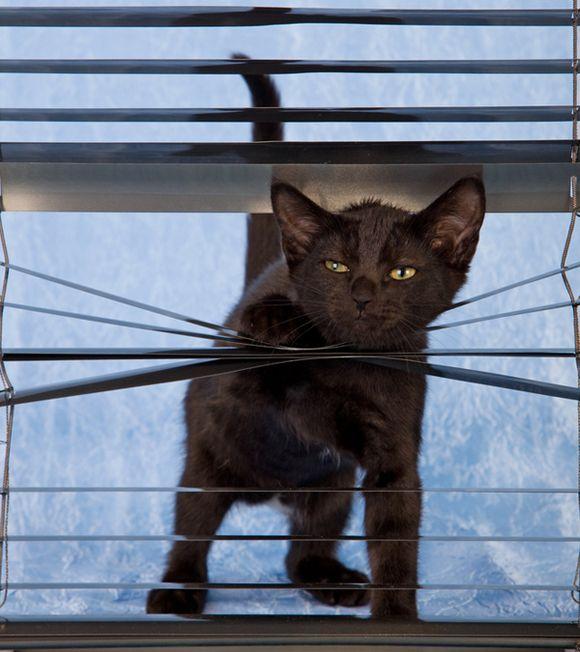 catsblinds10