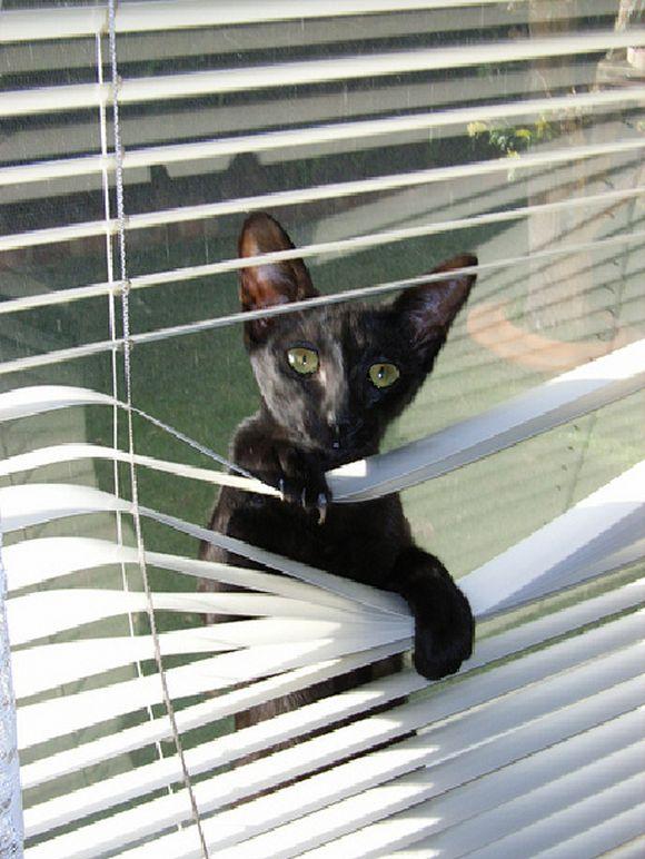 catsblinds11