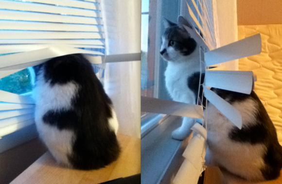 catsblinds12