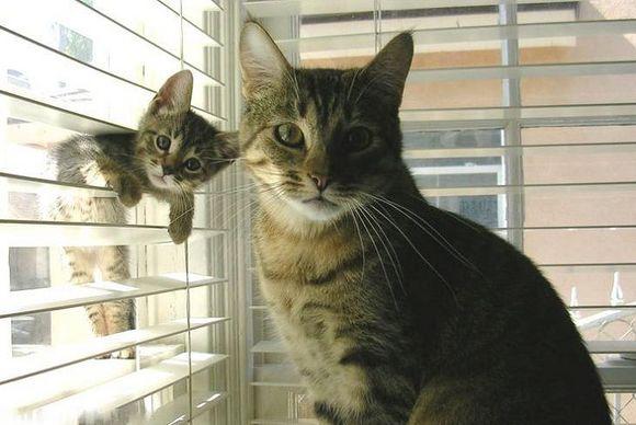 catsblinds14