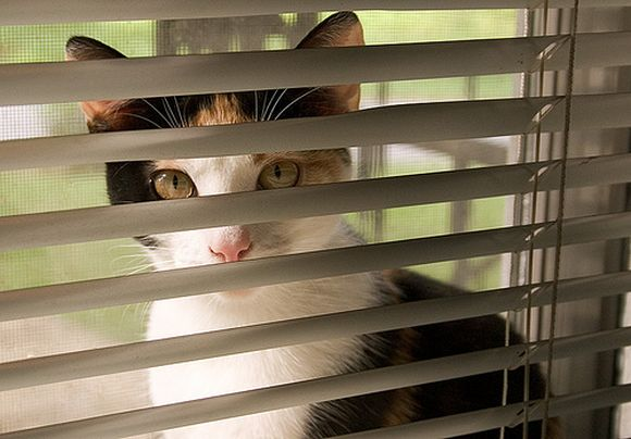 catsblinds15