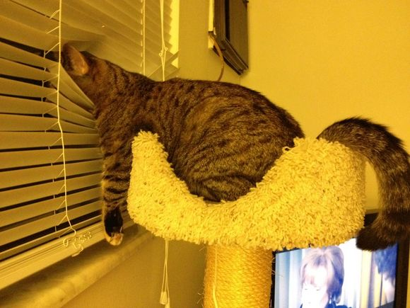 catsblinds16