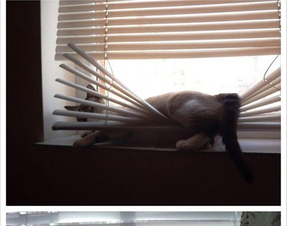 catsblinds3