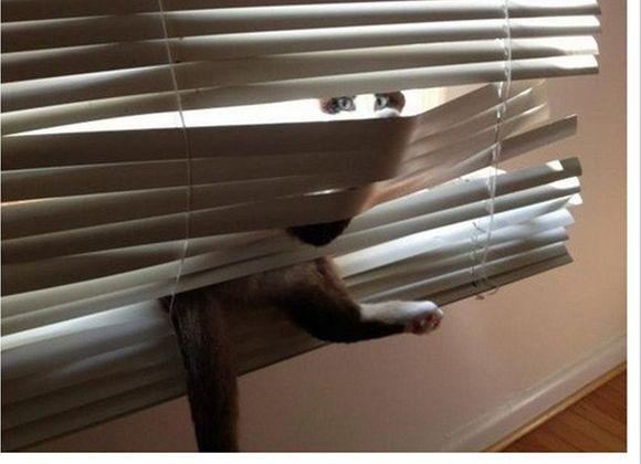 catsblinds4