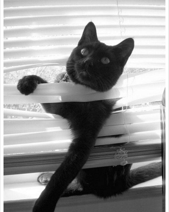 catsblinds5