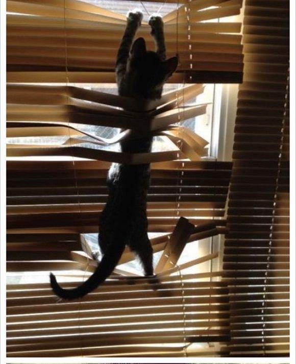 catsblinds6
